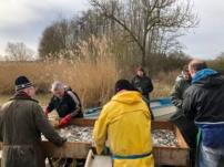 Abfischen kleiner Lindleinsee 2020